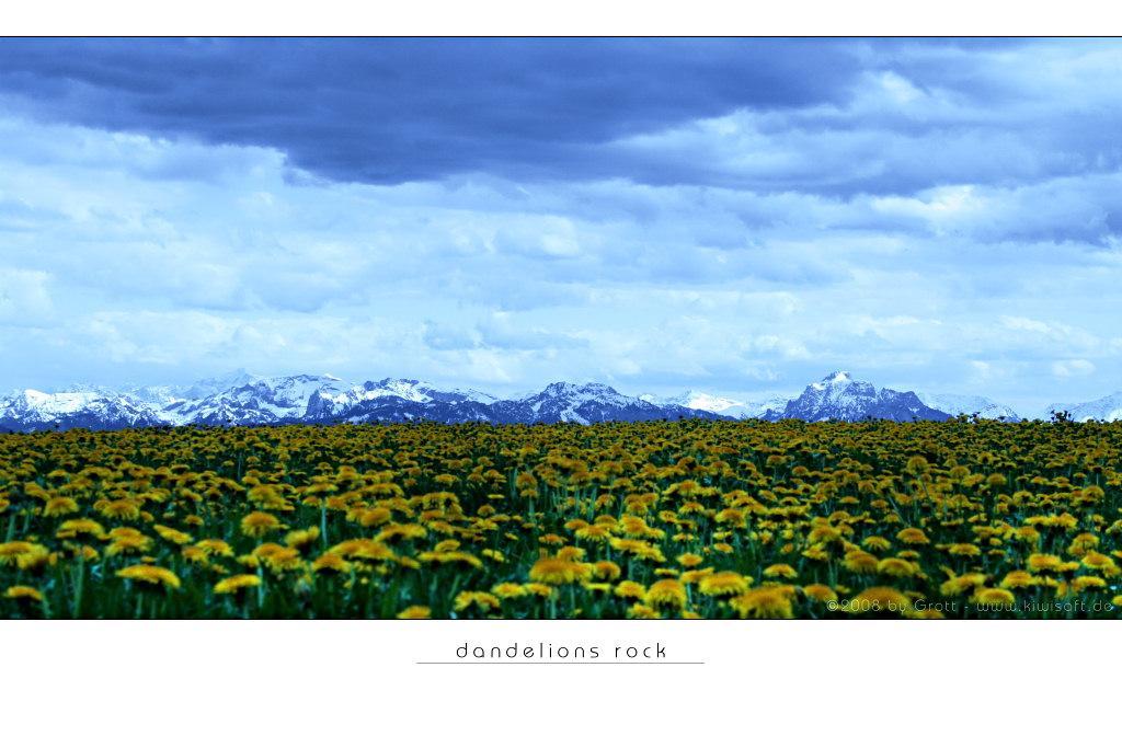 dandelions rock by Kiwisaft.de