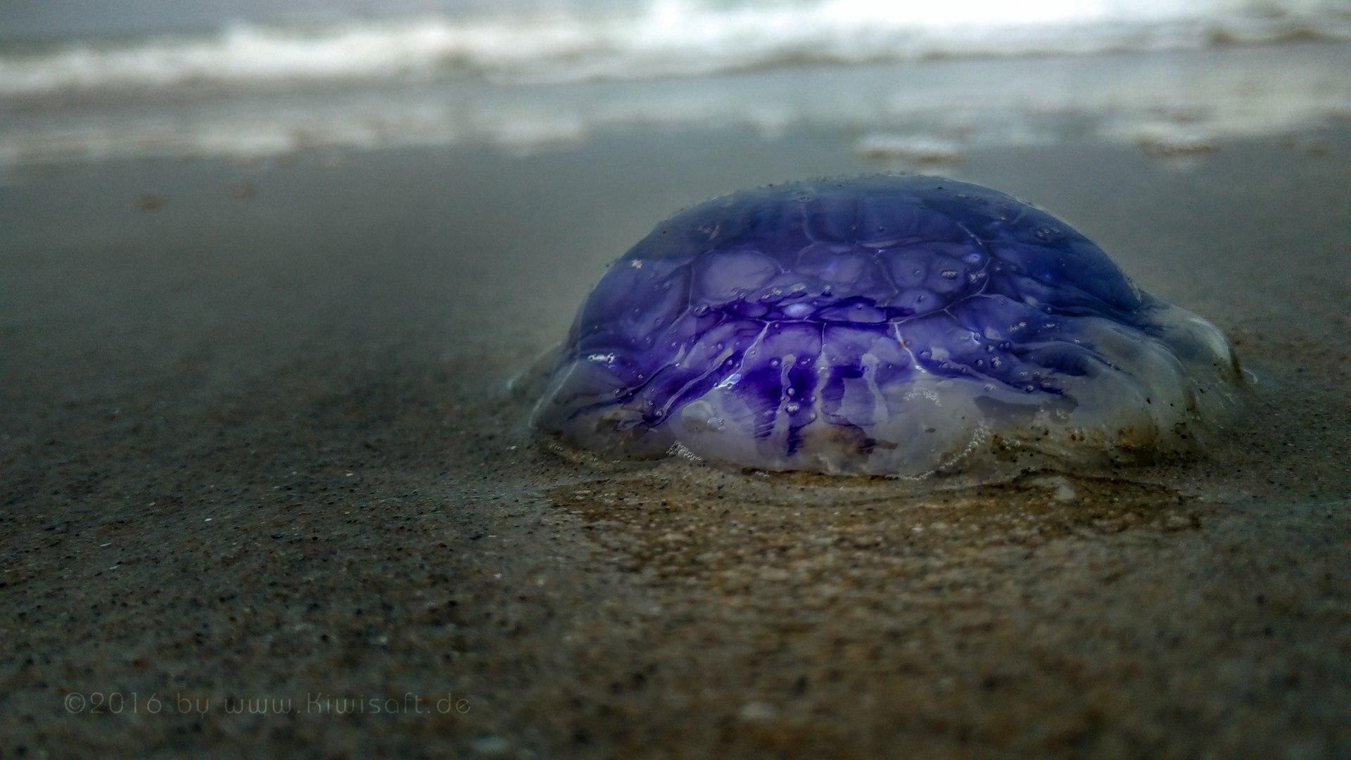 purple jelly 125915 by Kiwisaft.de