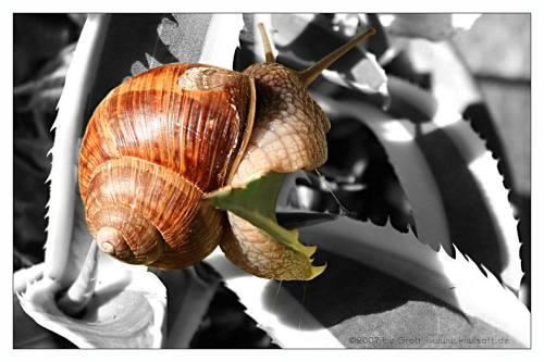 SM snail 2 by Kiwisaft.de