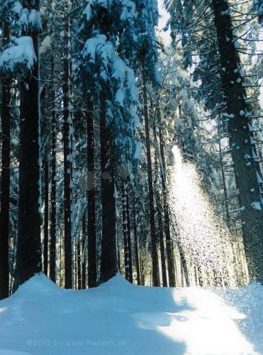 ghost of winter 134241 by Kiwisaft.de