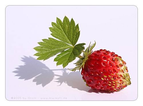 wild strawberry by Kiwisaft.de