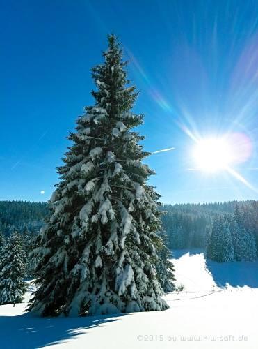 winter beauty 135345 by Kiwisaft.de