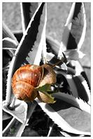 SM snail by Kiwisaft.de