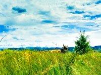 grass 'n' horns 162845 by Kiwisaft.de