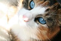 nicki blue eyes by Kiwisaft.de