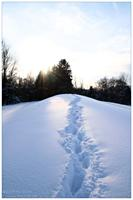 snowpath by Kiwisaft.de