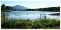 swan idyll by Kiwisaft.de